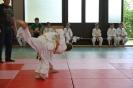 Judosafari 2012